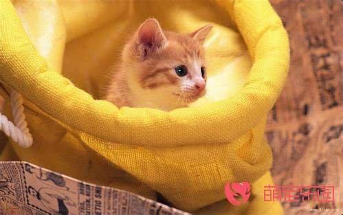成猫和幼猫哪个更适合家养